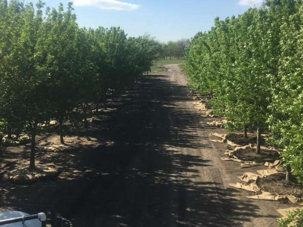 Check out the wide selection of trees for sale at our farm